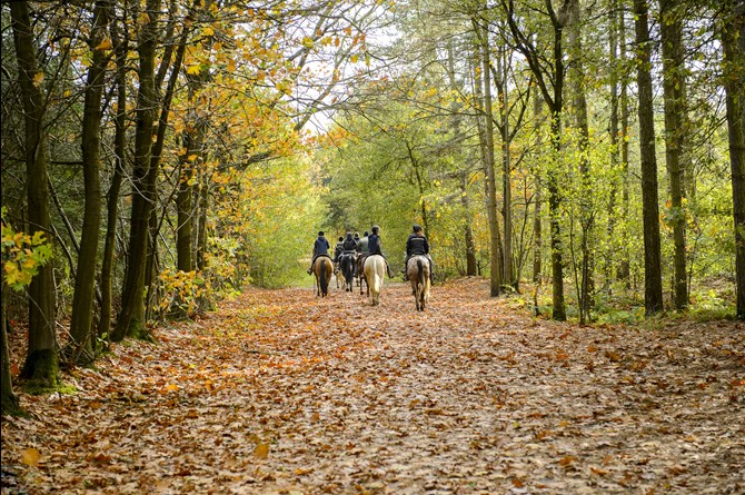A group of horse riders heading through a wooded area in the distance