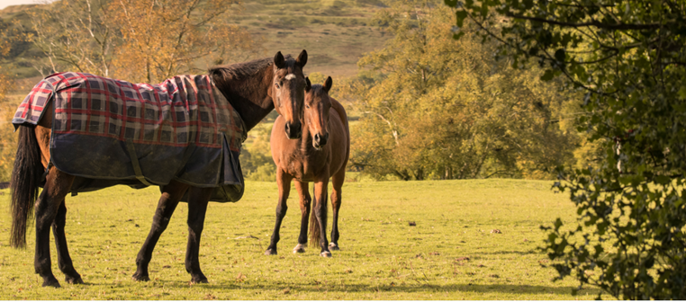 two horses standing in field