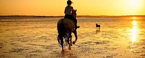Why is horse rider insurance important? And is it compulsory?