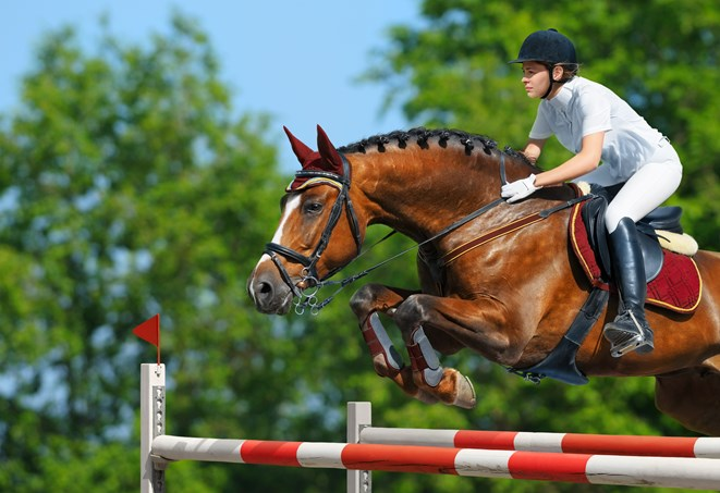 Horse and rider leaping over fence
