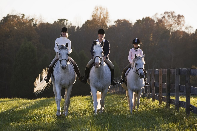 3 riders and their horses riding across a field together