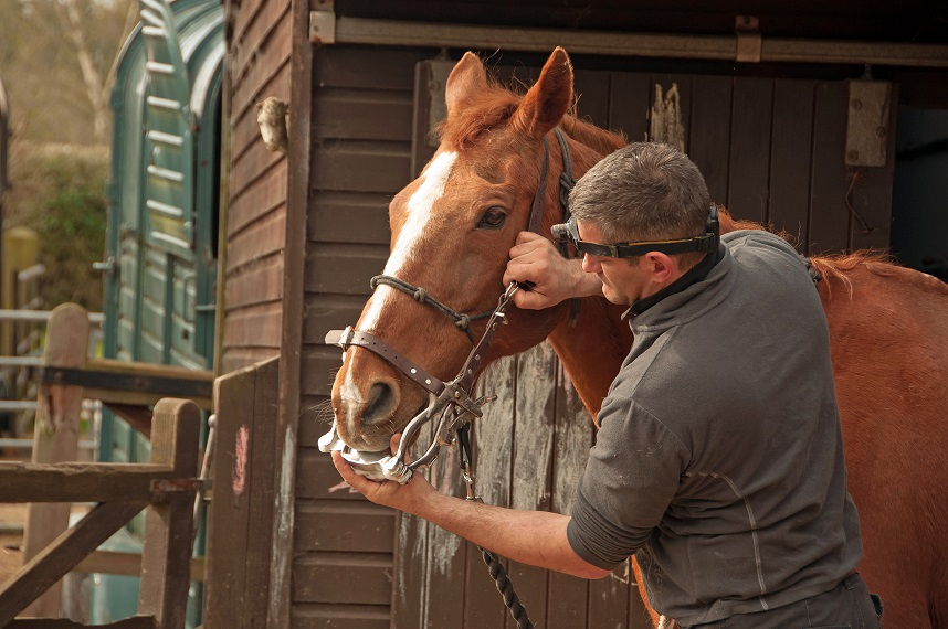 A horse dentist checking the teeth of a horse at a yard
