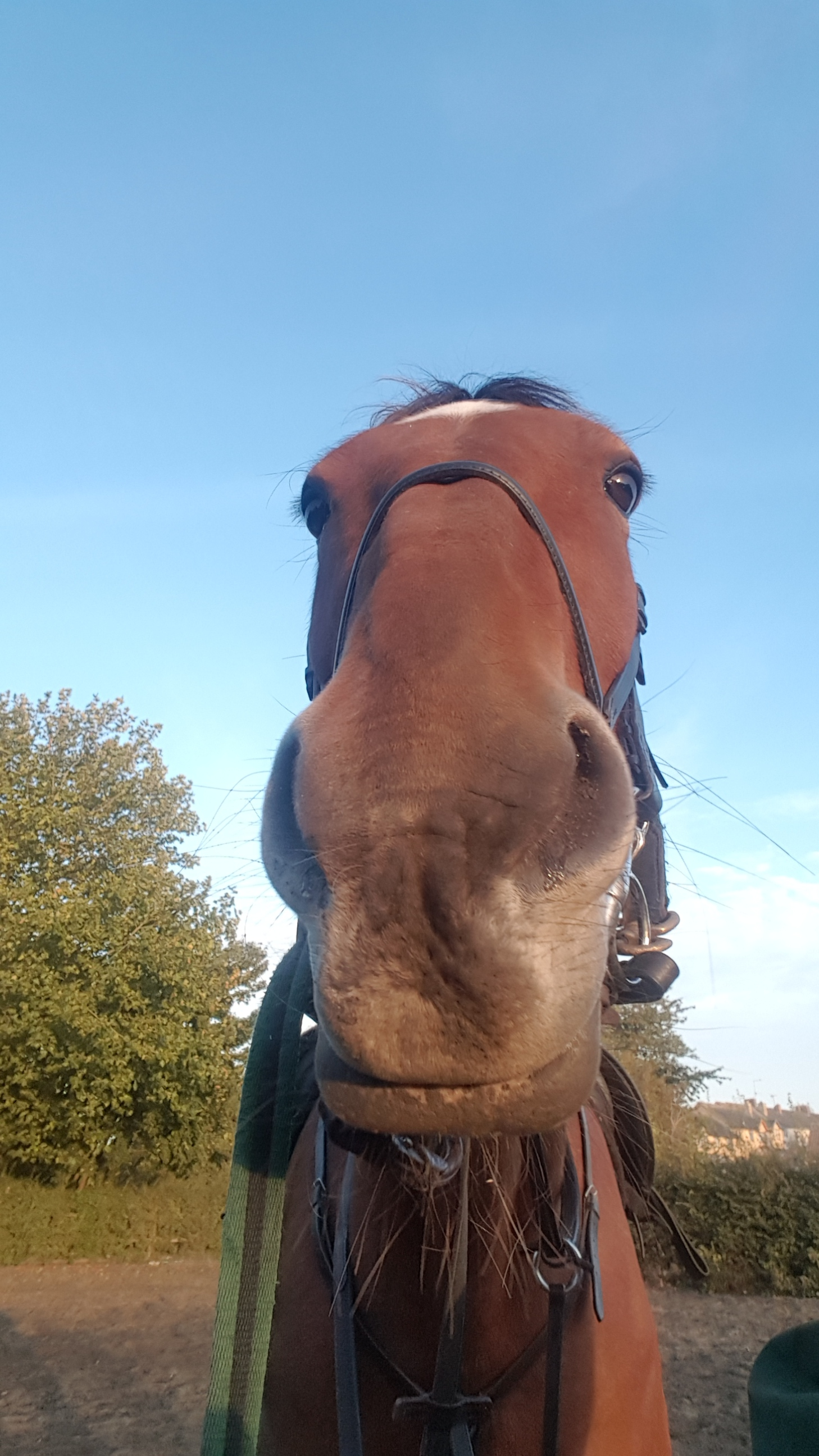 No ear Bob, something tells me he's not impressed with flat work today!