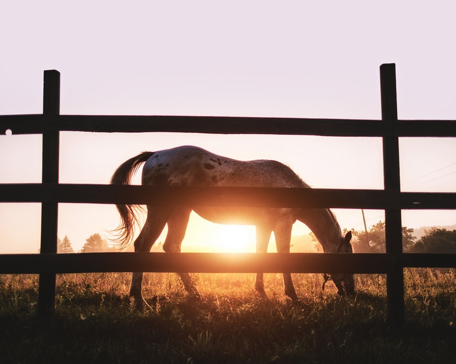 A horse grazing in a field with the sun setting behind