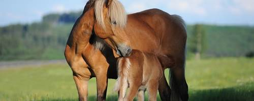 How to take care of a pregnant mare