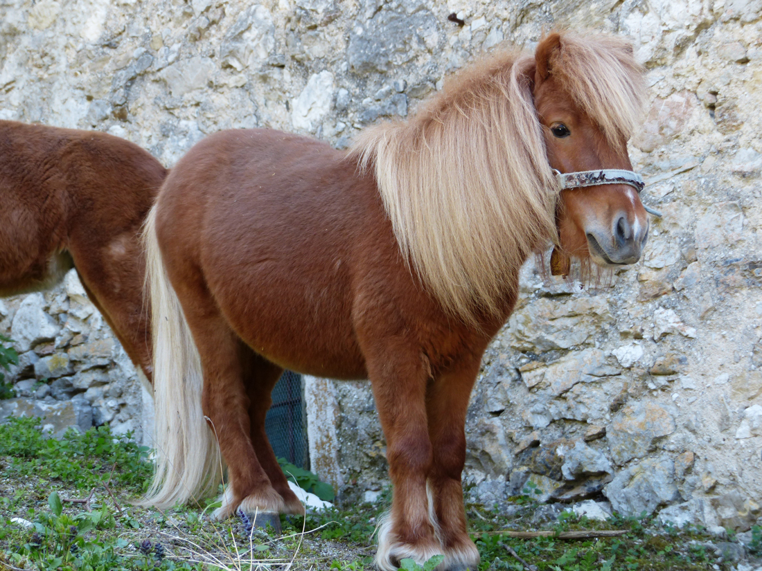 What Are The Most Popular Horse Breeds For Riding Equesure