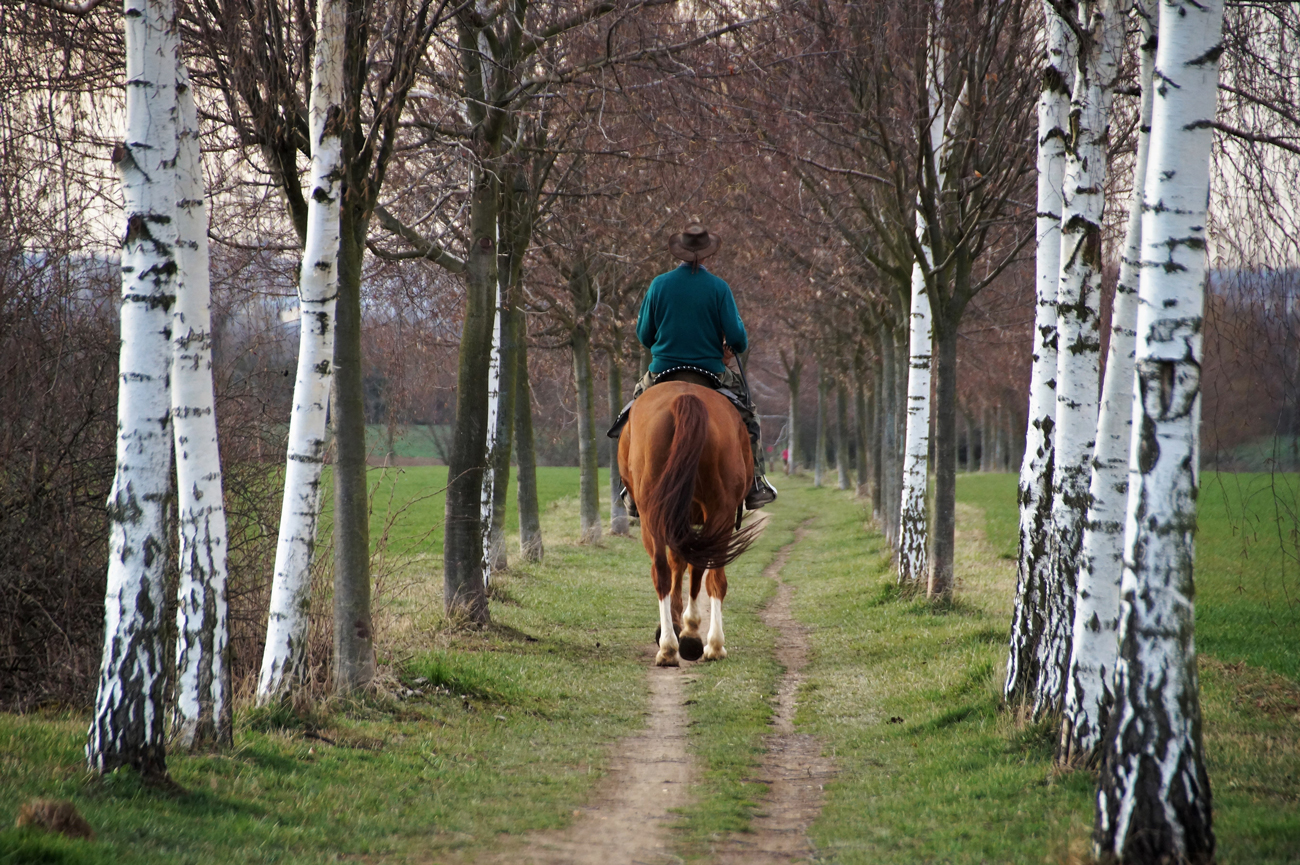 a horse and rider walking between trees in a field