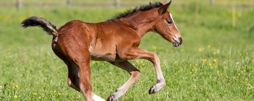 How to care for a new-born foal