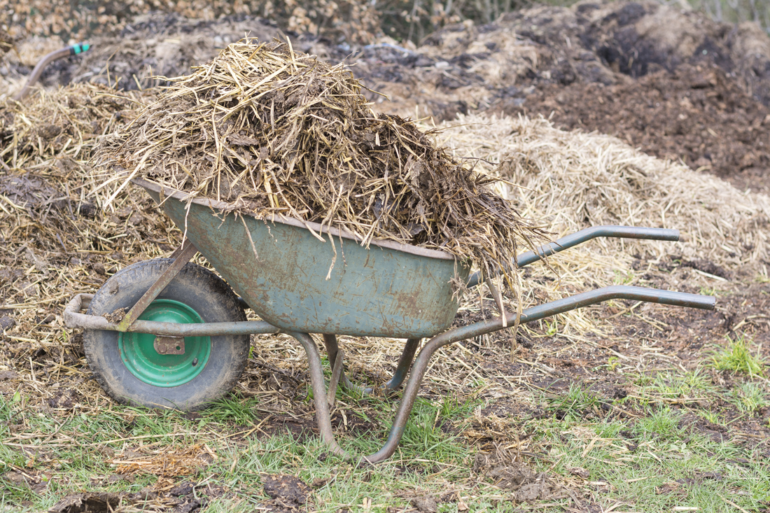 A wheelbarrow filled with used hay during mucking out