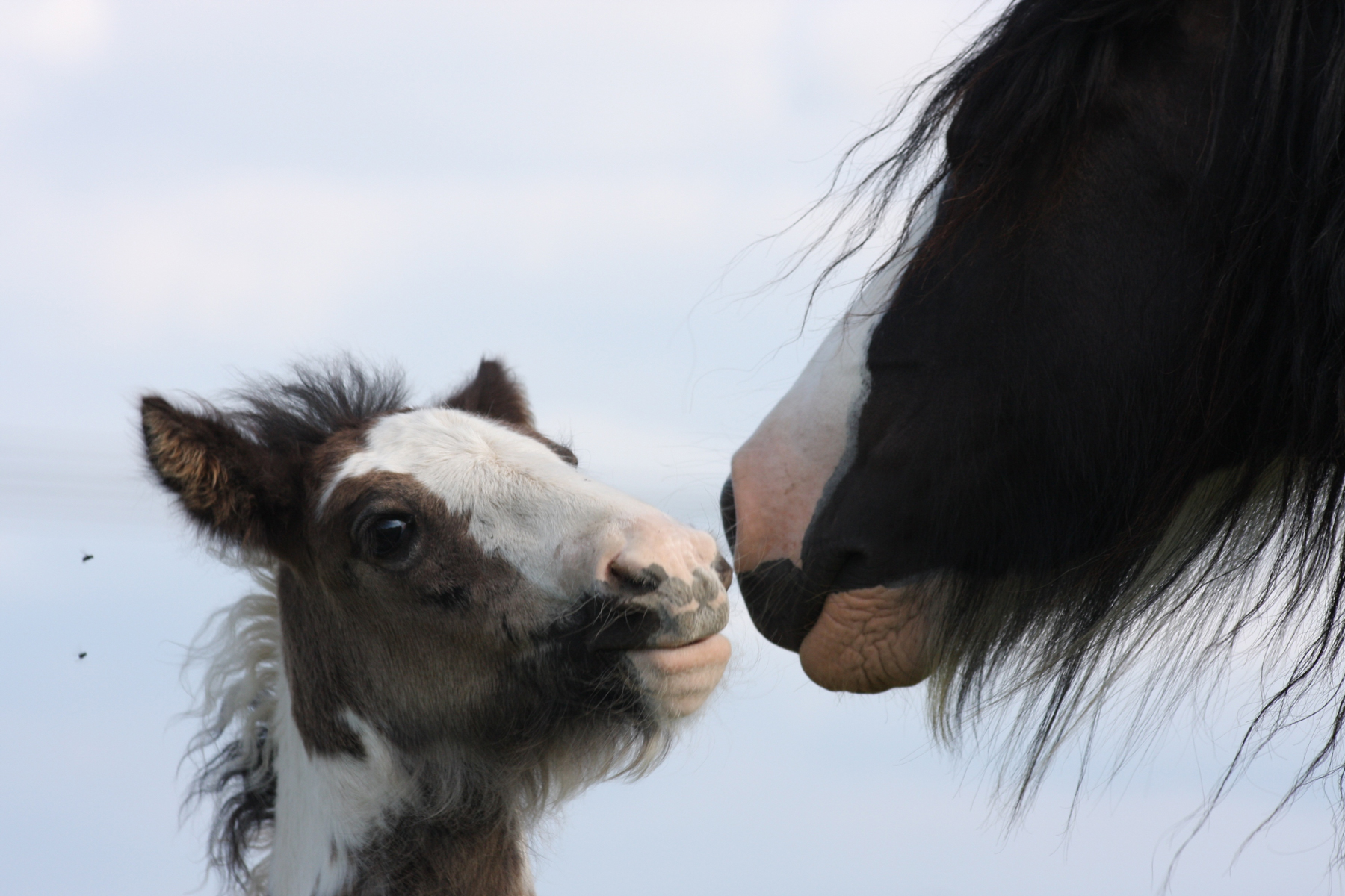 A mare and foal with their heads close facing each other