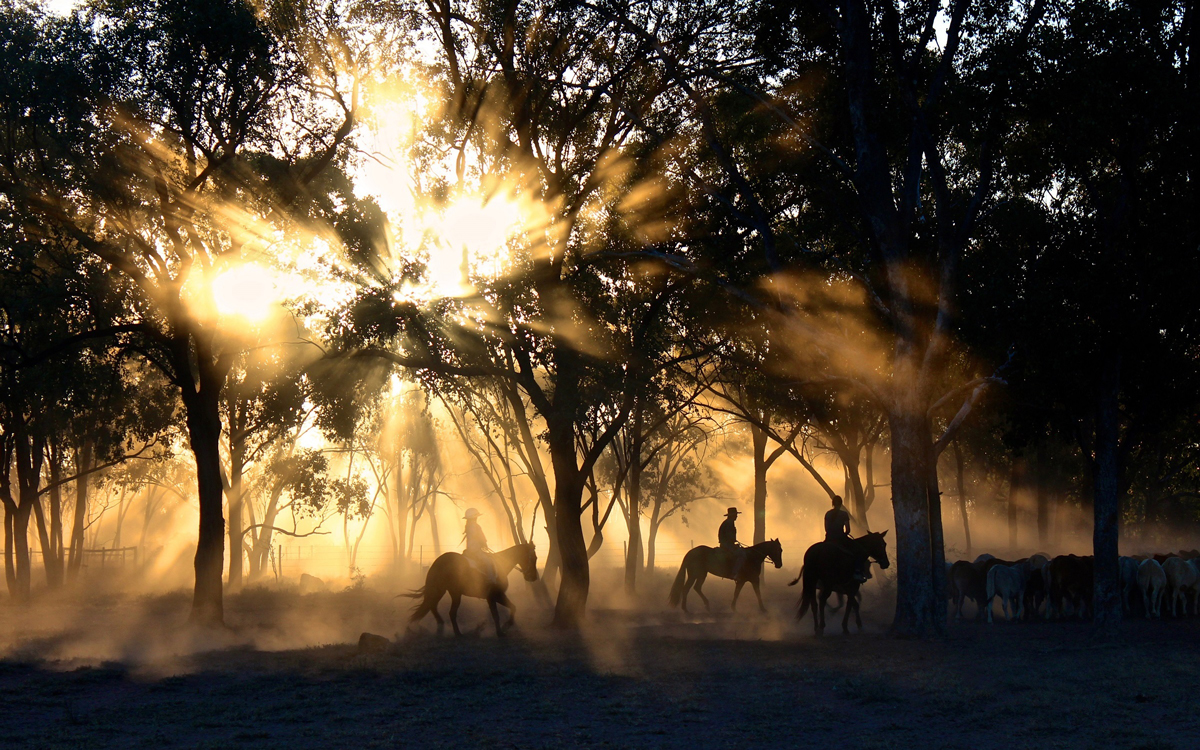 Three horse riders riding through woodland with the sun gleaming through the tress casting a silhouette over them