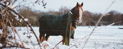 How to care for your horses through the winter