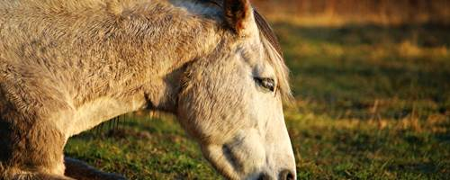 How to spot signs of illness in your horse