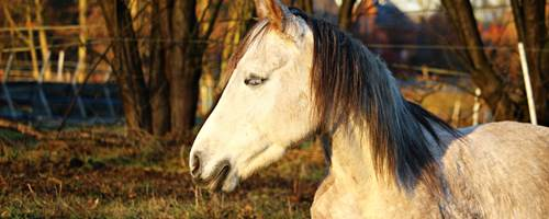 How to avoid injuring your horse