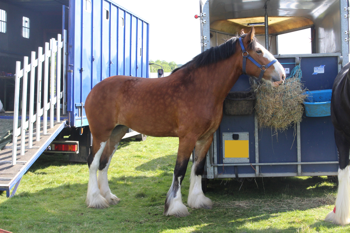 A horse standing next to a horse box