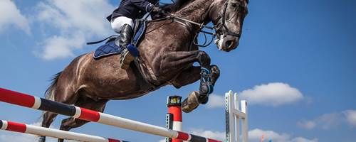Best UK horse shows to visit in 2020