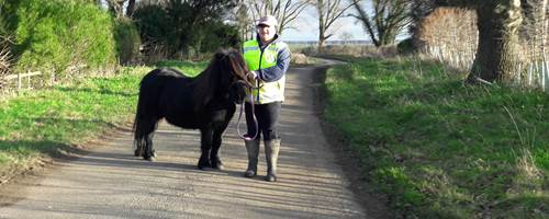 The Not-So-Secret Diary of Diva the Shetland Pony - New Year's Resolution