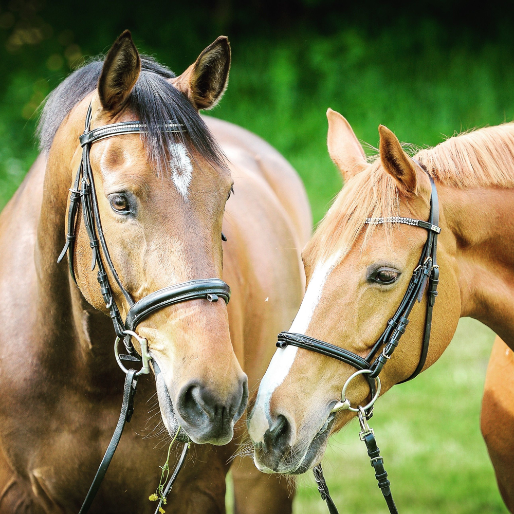 Two horses with bridles on in a field