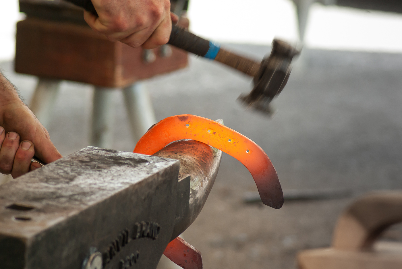 A farrier hammering a horse shoe into place