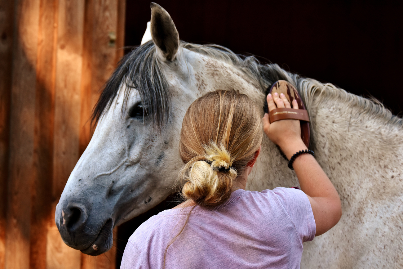 A horse being brushed by its owner