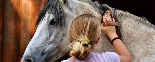 How to care for a horse's coat, mane and tail
