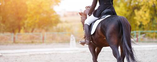 How to get your confidence back after a horse riding accident