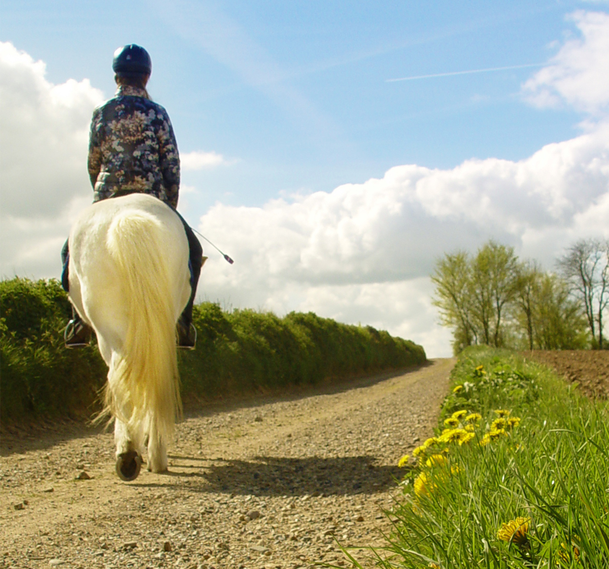A horse and rider on a country road on a sunny day