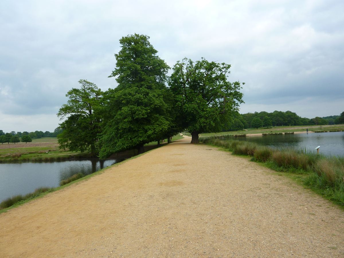 A bank between two lakes at Richmond Park in London