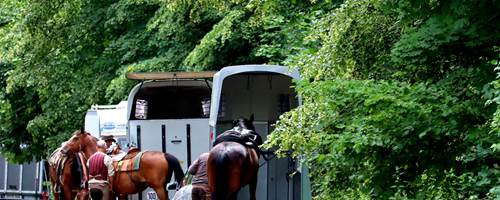 How to clean your horsebox or trailer
