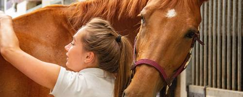What is equine massage?