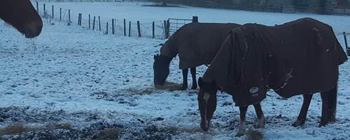 Paula's Blog - A few days of frost and not sinking in the mud whoppee!