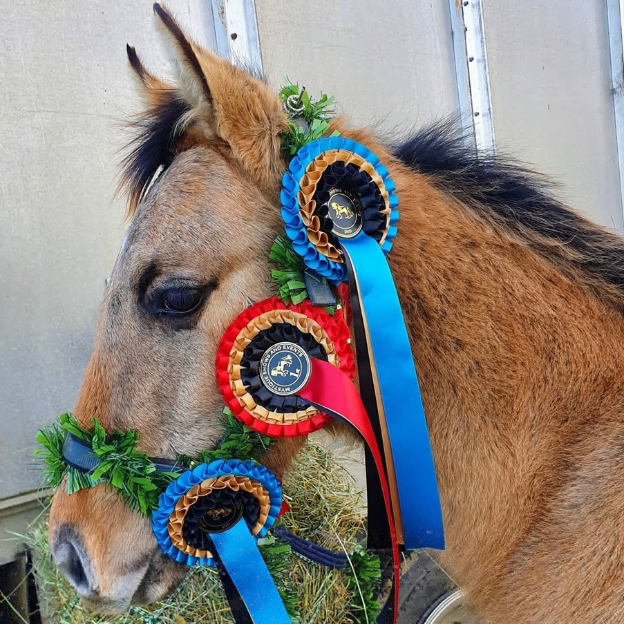 Horse with winning ribbons