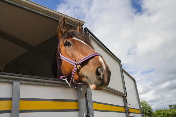 Horse in their trailer