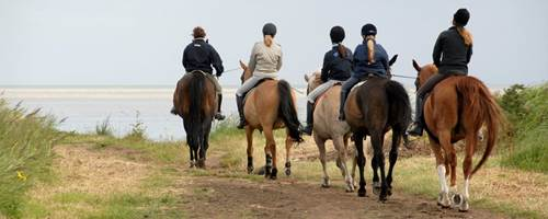 Must-know horse associations in the UK